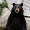 beargryls